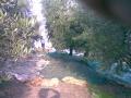 raccolta delle olive.jpg
